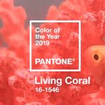 Living Coral Travertine